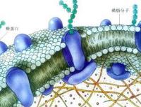 细胞运输膜融合概念股