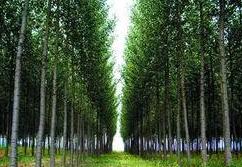 林场改革概念股