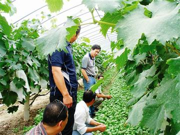 农业合作社概念股