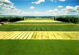 玉米种业概念股