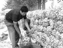 大蒜制品退税概念股