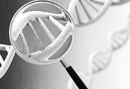 基因诊断概念股