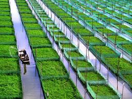 生态农业概念股