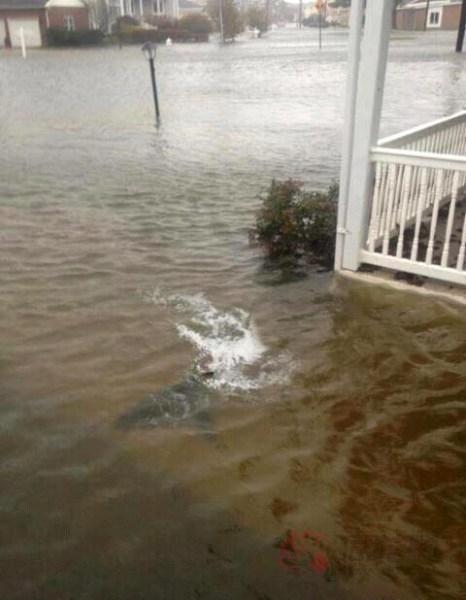 """【热点】电影版的《大海啸之鲨口逃生》&超级飓风""""桑迪""""之鲨鱼游上"""