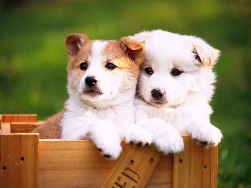 高清图:可爱的小动物