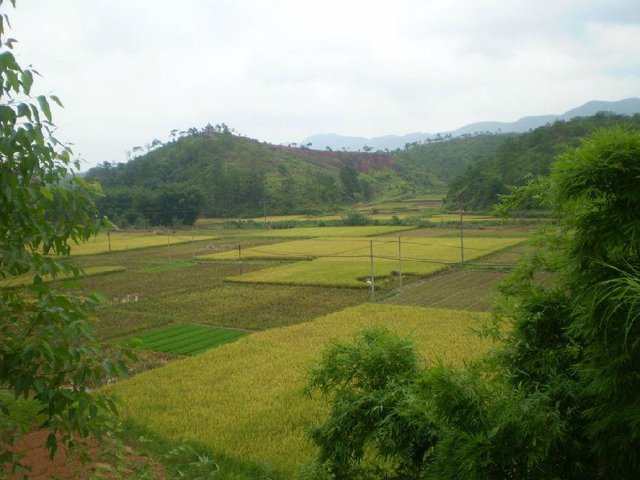 稻田风光中最动人的风景(高清图)