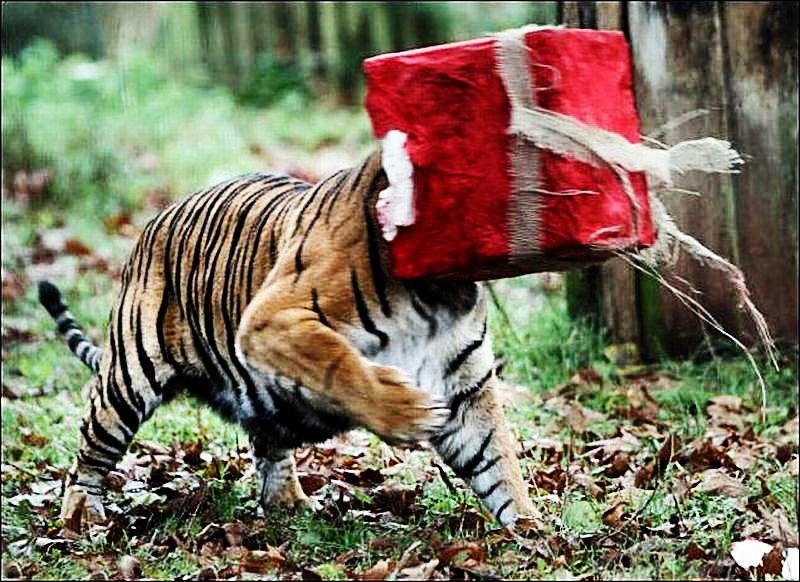 老虎不开心照片