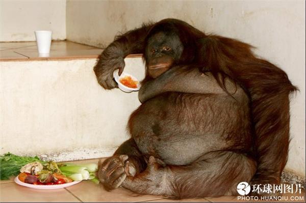 英国《太阳报》评选世界十大最胖动物:五官