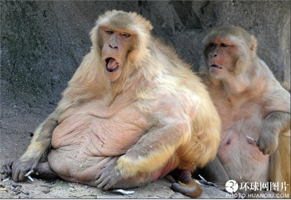 英国《太阳报》评选世界十大最胖动物:五官难以辨认