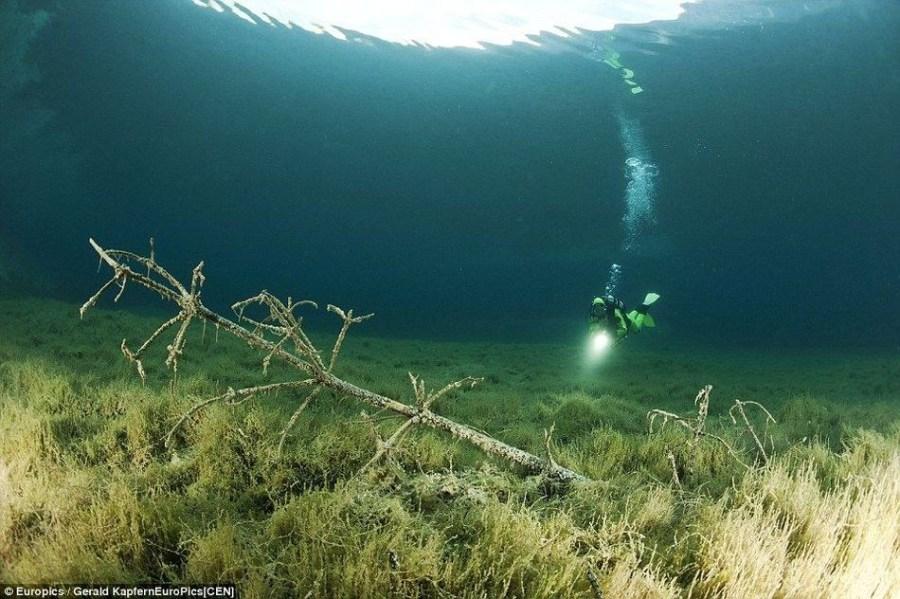 春夏来临,阳光直射入水底,大树, 鱼,草,以及水底枯木长椅共同构成了这