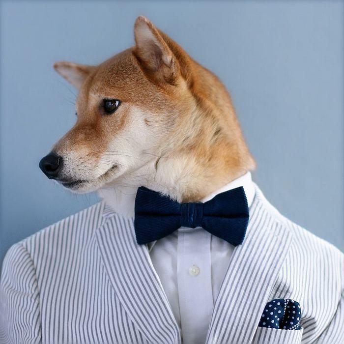 基姆与冯现在都在为狗服装店工作,希望能与造福于动物的慈善机构合作.