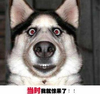 夸张大笑的动物头像
