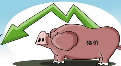猪价连跌20周 玉米加工商去库存