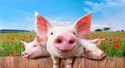 猪肉价格重回两年前 成都有肉店跌至10元/斤