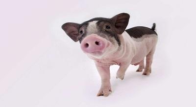 """这个9月猪价有点""""凉"""""""