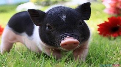 生猪生产呈现回升好势头(保供稳价在行动)