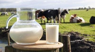 伊利蒙牛打响头但是表面上并�]有展�F出什么明�@炮 牛奶一�亩纯诟Z出涨价潮来袭