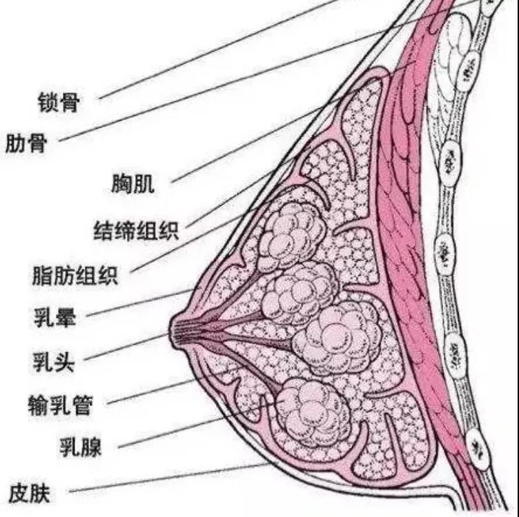 乳腺疾病怎么办